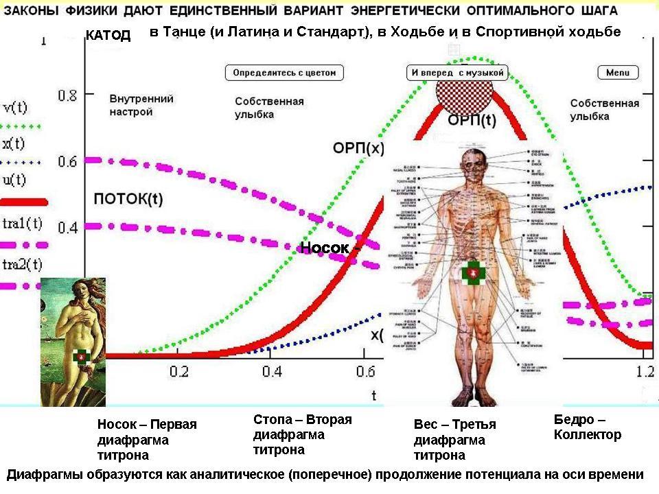 Многомерная модель человека